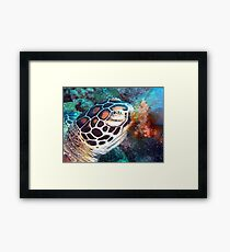 Turtle Jelly Framed Print