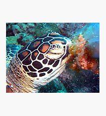 Turtle Jelly Photographic Print
