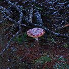 Amanita in the snow by michael griffith