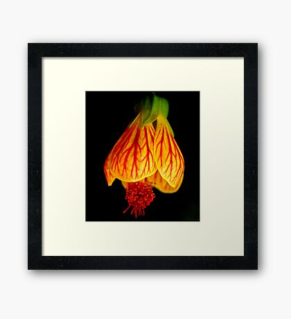 Yellow Red on Black Framed Print
