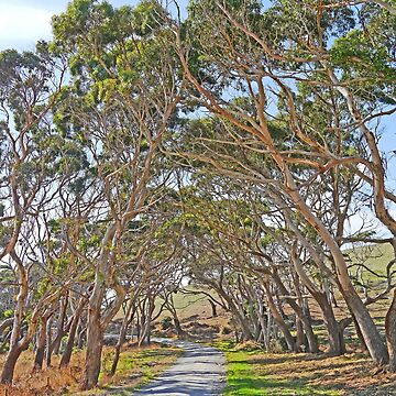Tangled Avenue by grmahyde