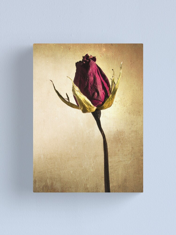 Alternate view of Rose Canvas Print