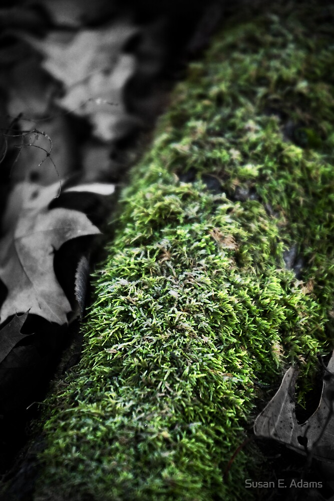 Mossy Log on a Frosty Morning by Susan E. Adams