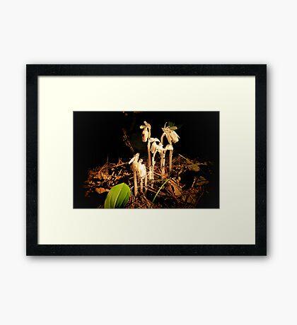 Small White Flower in Wood Framed Print