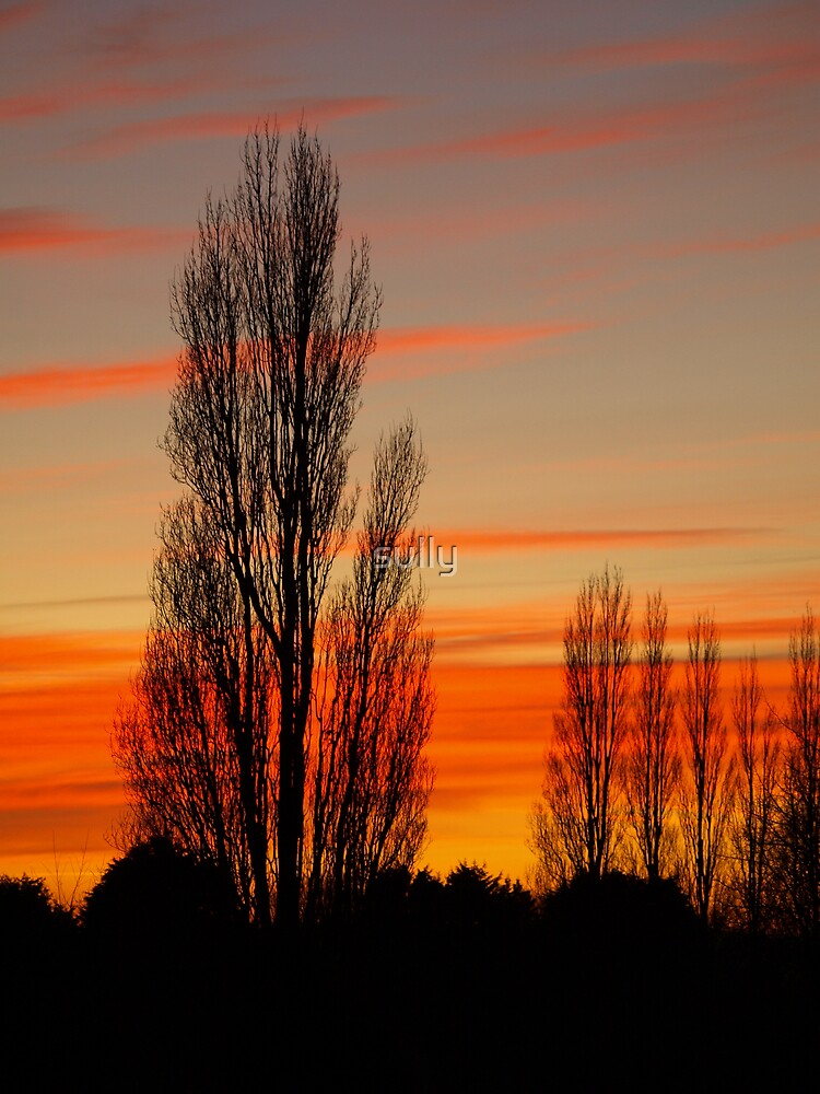sunset over chester zoo by sully