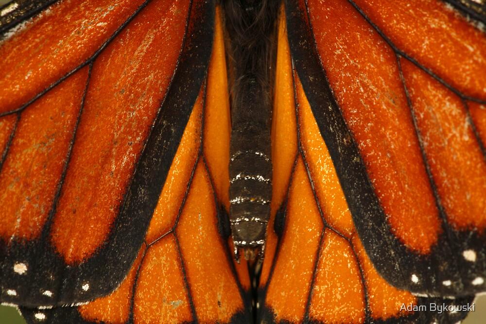 Symmetry in Nature by Adam Bykowski