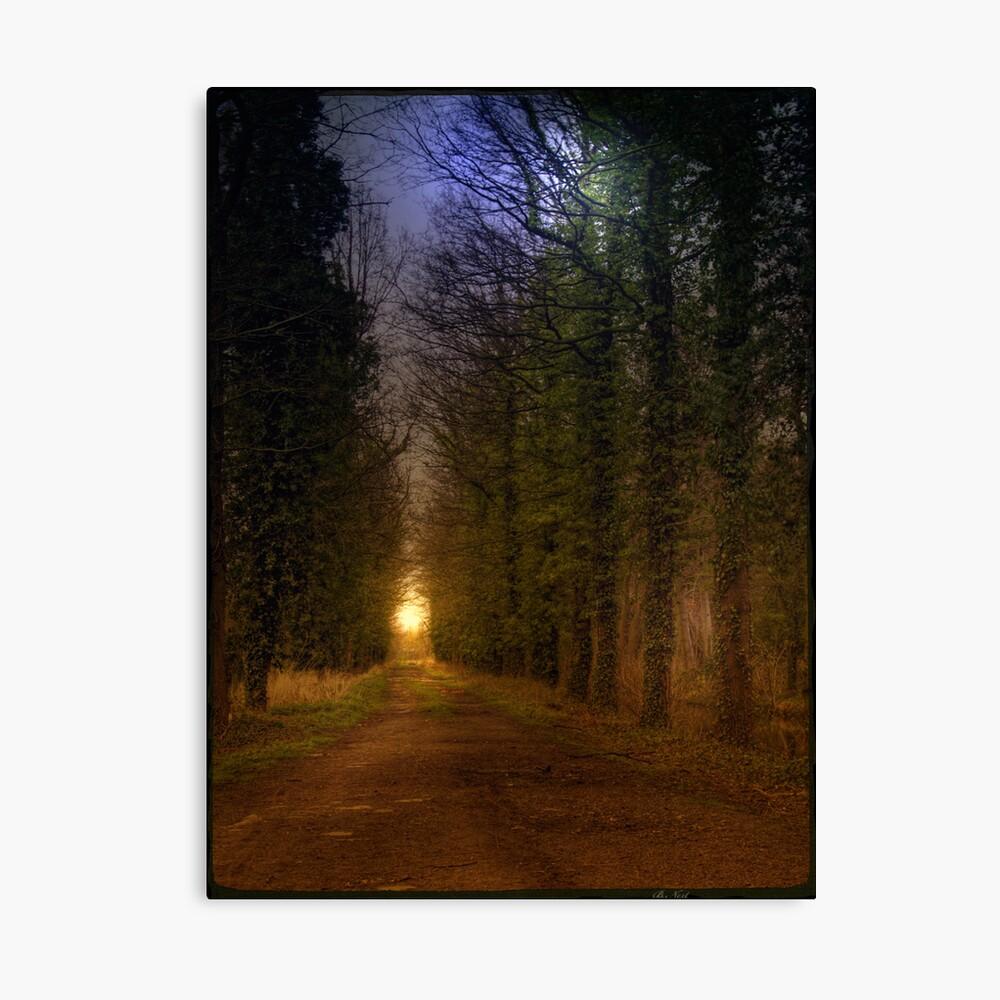 Path; Light Canvas Print