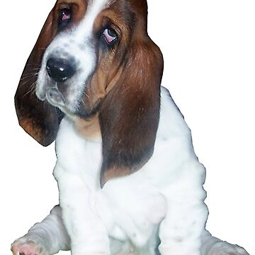 Barney the Bassett Hound  by ginnymac