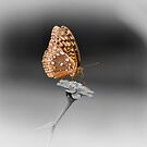 Butterfly Seeking Nectar by Ron Alcorn