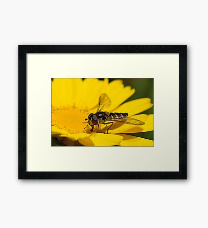 Busy Framed Print