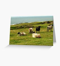 Black Sheep in the Family Greeting Card