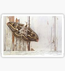 South African Marbled Emperor Moth Sticker