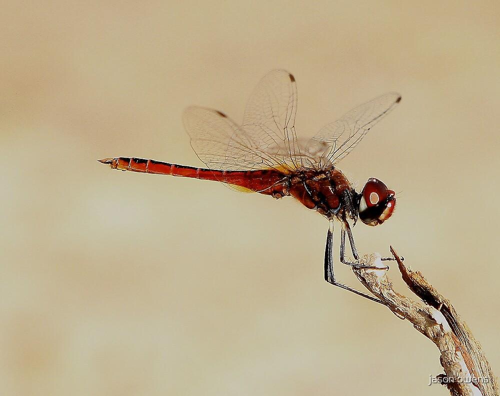 dragonfly by jason owens