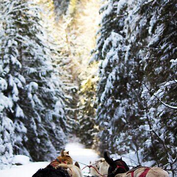 Dogsledding by rubenwills