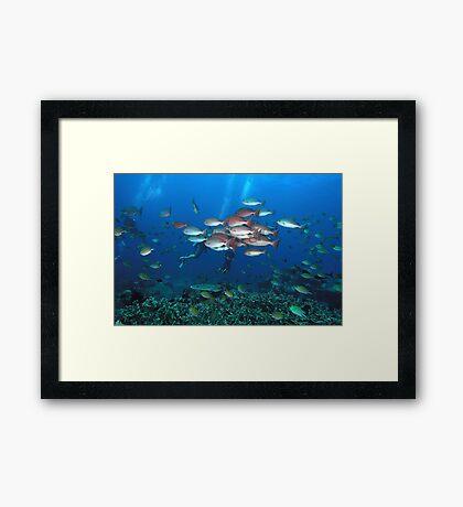 Seascape Framed Print
