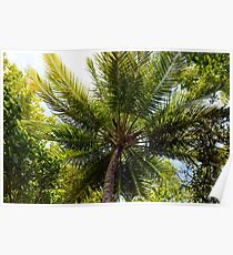Natural background with palm tree top Poster