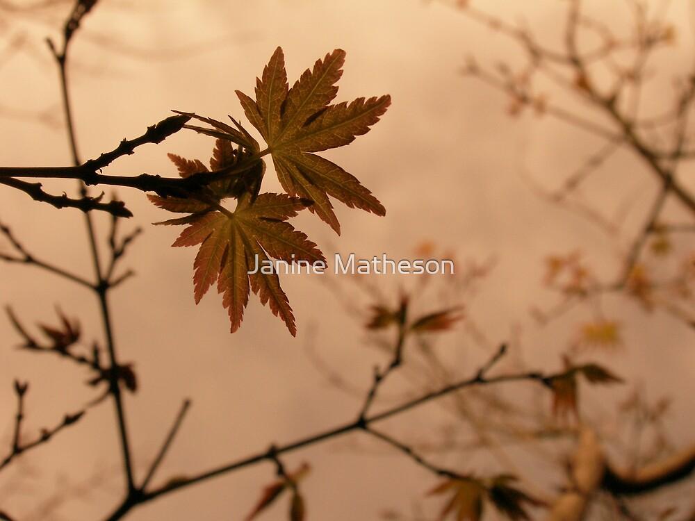 seasons change by Janine Matheson