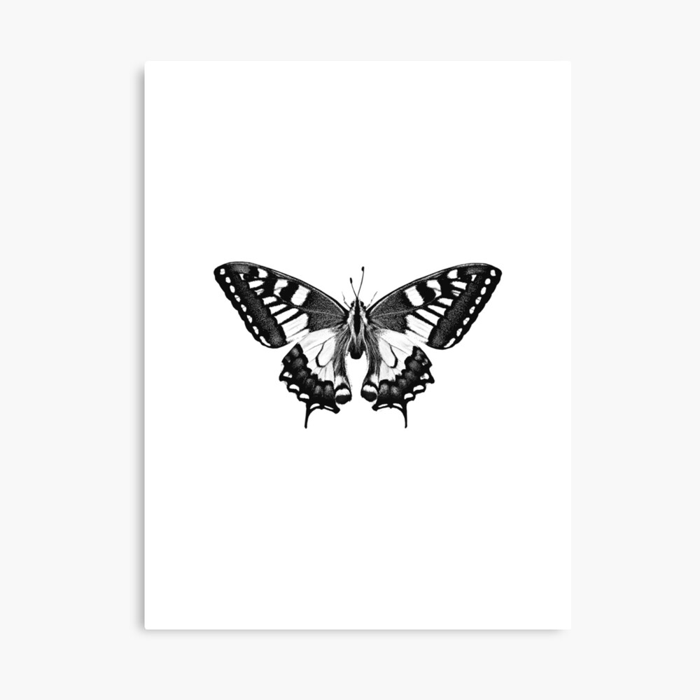 Black Butterfly Art Botanical Poster Decal Canvas Print By