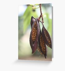 Seeds in a Pod Greeting Card