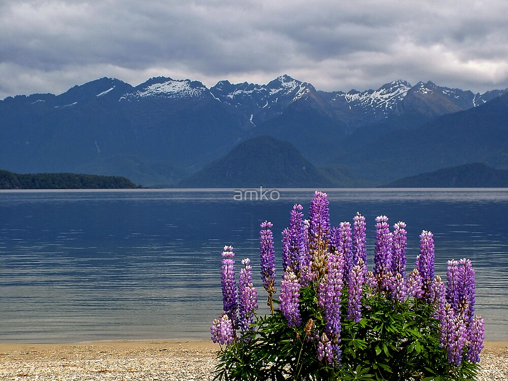 manapouri lupins by amko