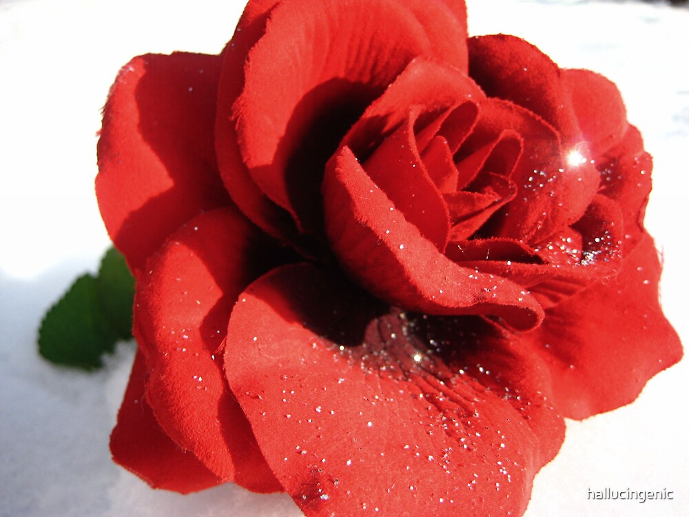 Glitter Rose & Snow by hallucingenic