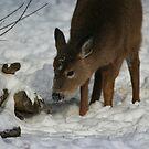 Winter Wonder by debfaraday