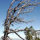 Weathered Tree - 3024 by BartElder