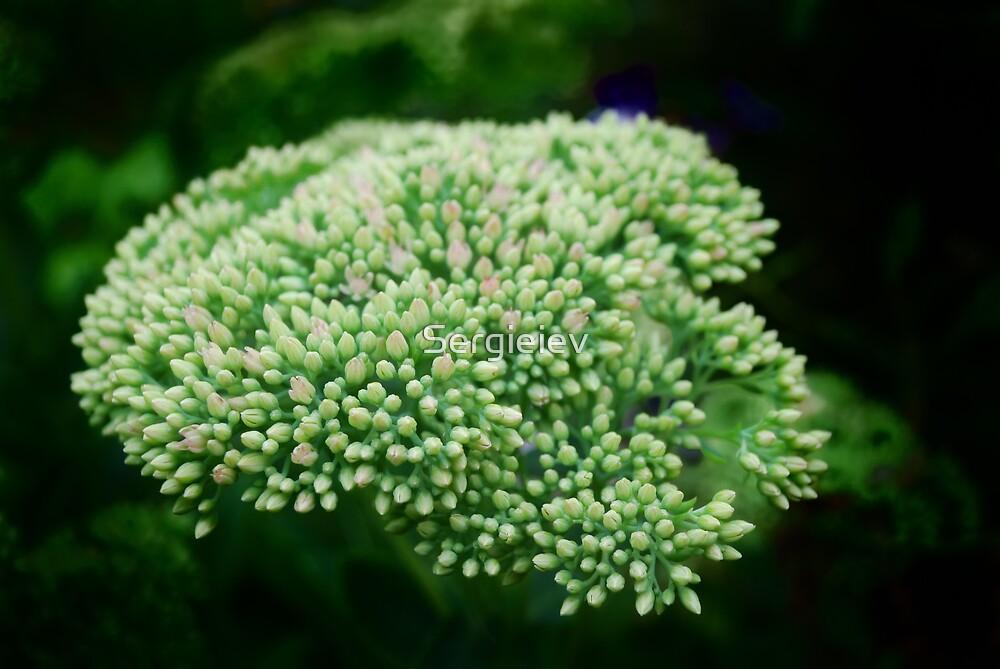 Green vegetative background  by Sergieiev