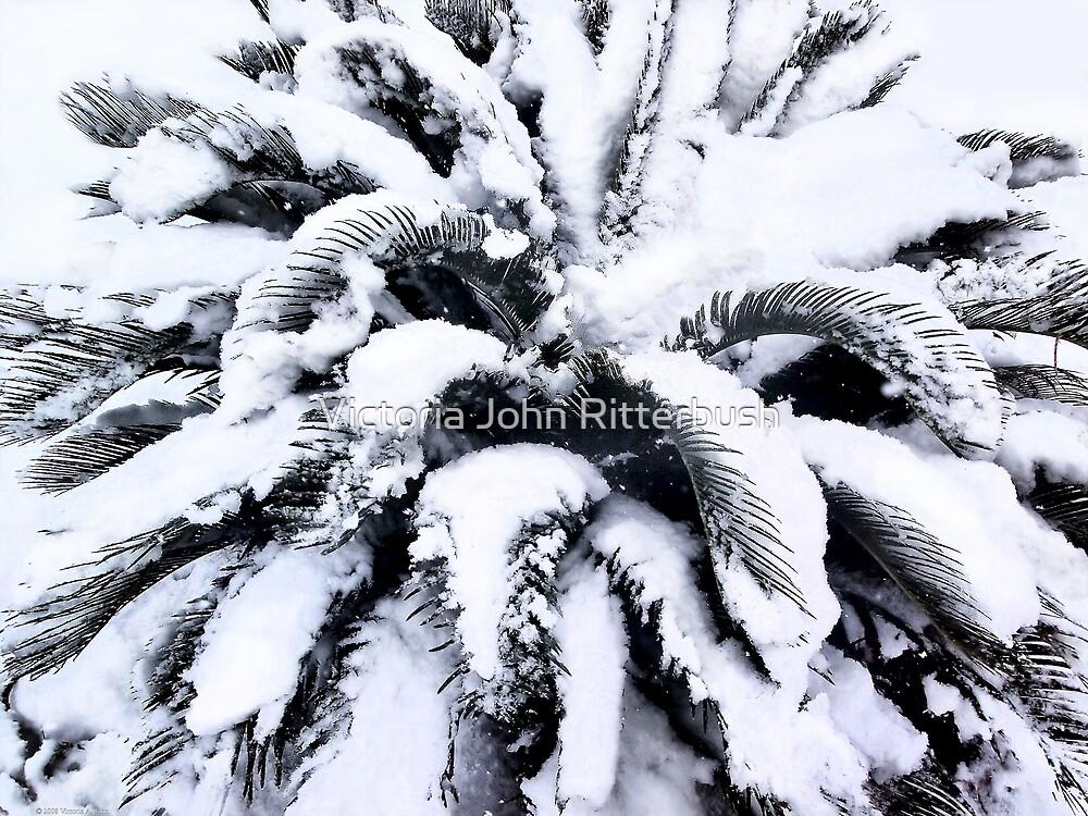 Fronds of Snow by Victoria John Ritterbush