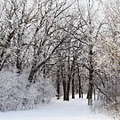Frosted Trail by Geoffrey