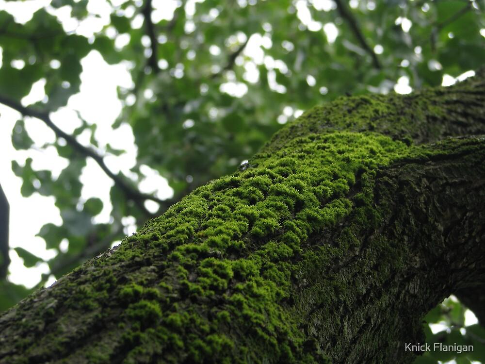 Moss on Tree by Knick Flanigan
