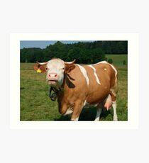 Cow in Upper Bavaria Art Print