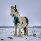 Snow Pony by Nigel Bangert