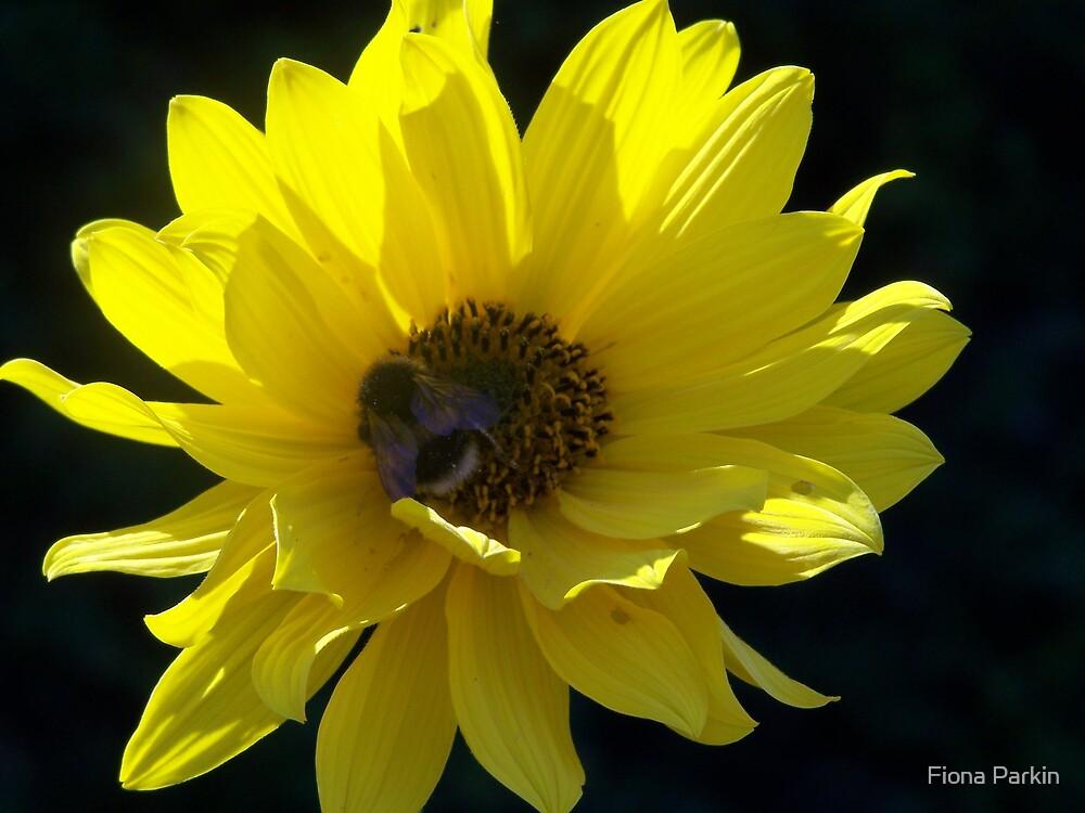 yellow by Fiona Parkin