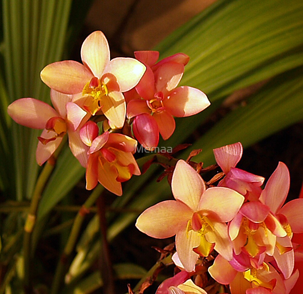 Little Orchids by Memaa