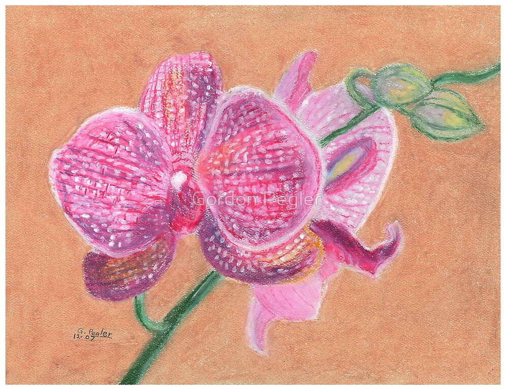 Pink Orchid by Gordon Pegler