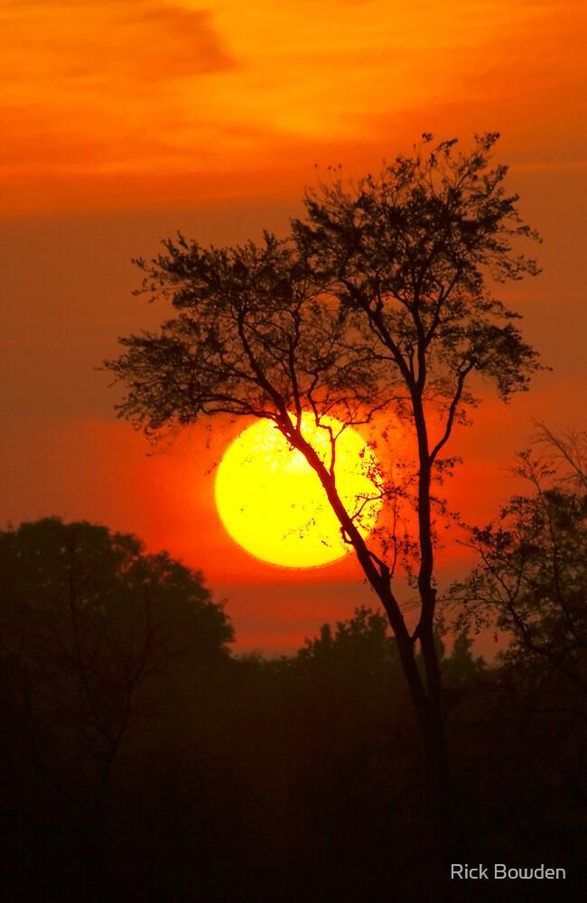 Sunset Tree by Rick Bowden