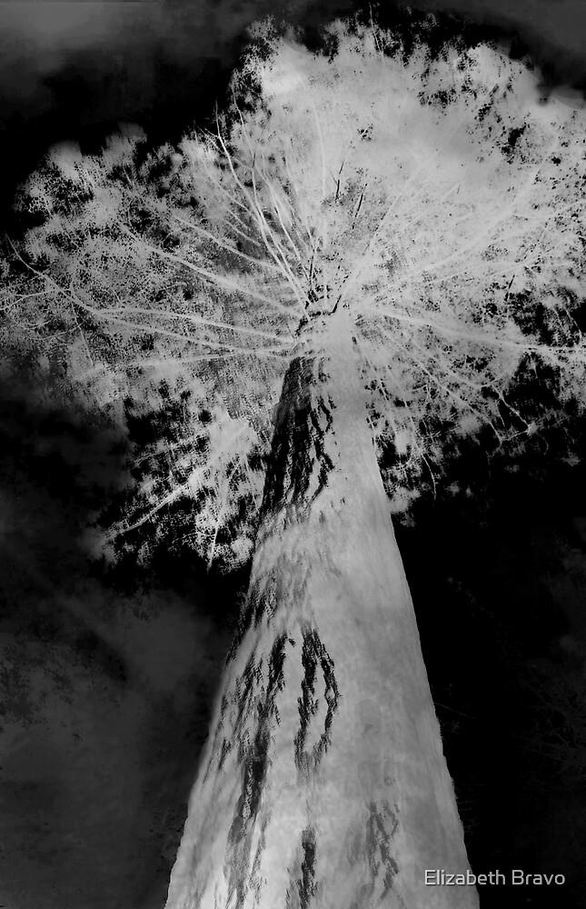 Ghost tree by Elizabeth Bravo