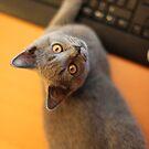 Got an email ? by supermimai