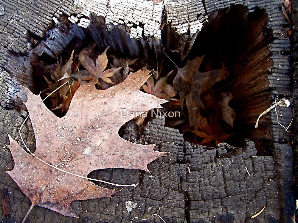 Fall Series by Dana Nixon