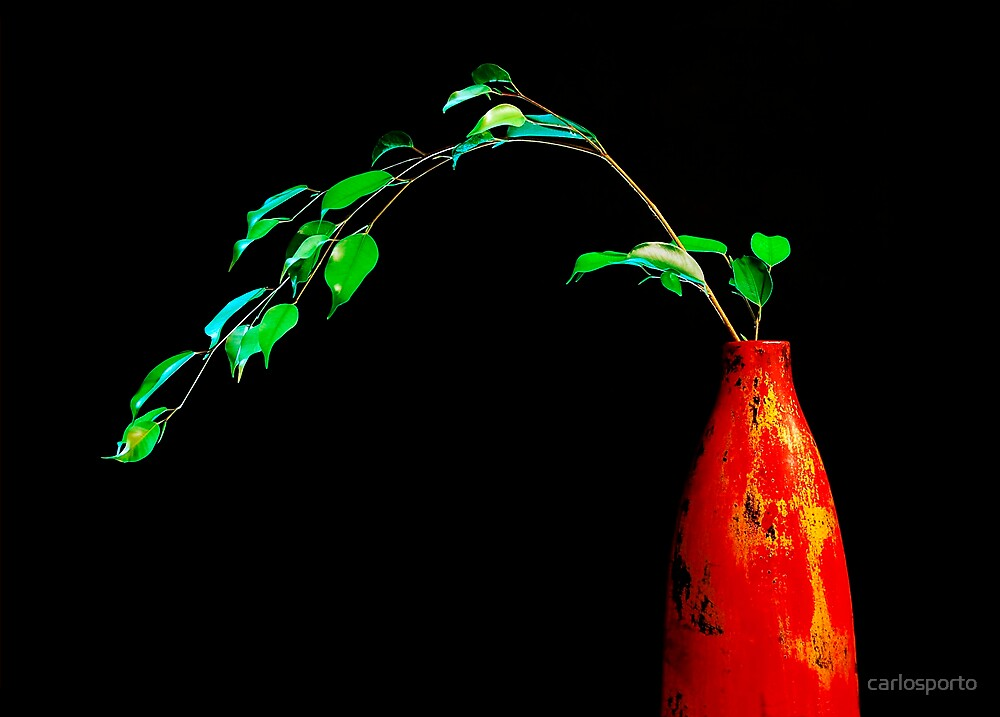 Red Vase by carlosporto