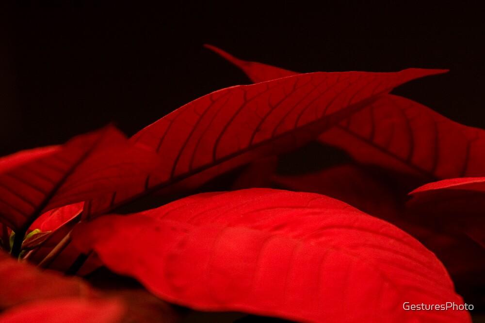 Poinsettia II by GesturesPhoto