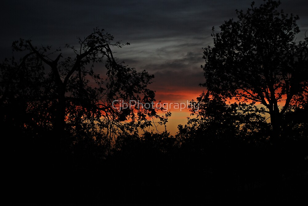 Trees On Sunset by CjbPhotography