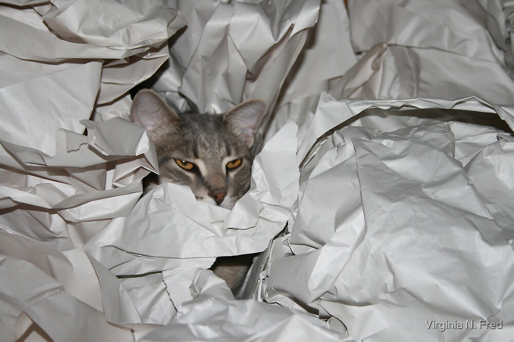 Lets play find the Kitty by Virginia N. Fred