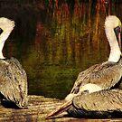 Pelican Trio by Jonicool