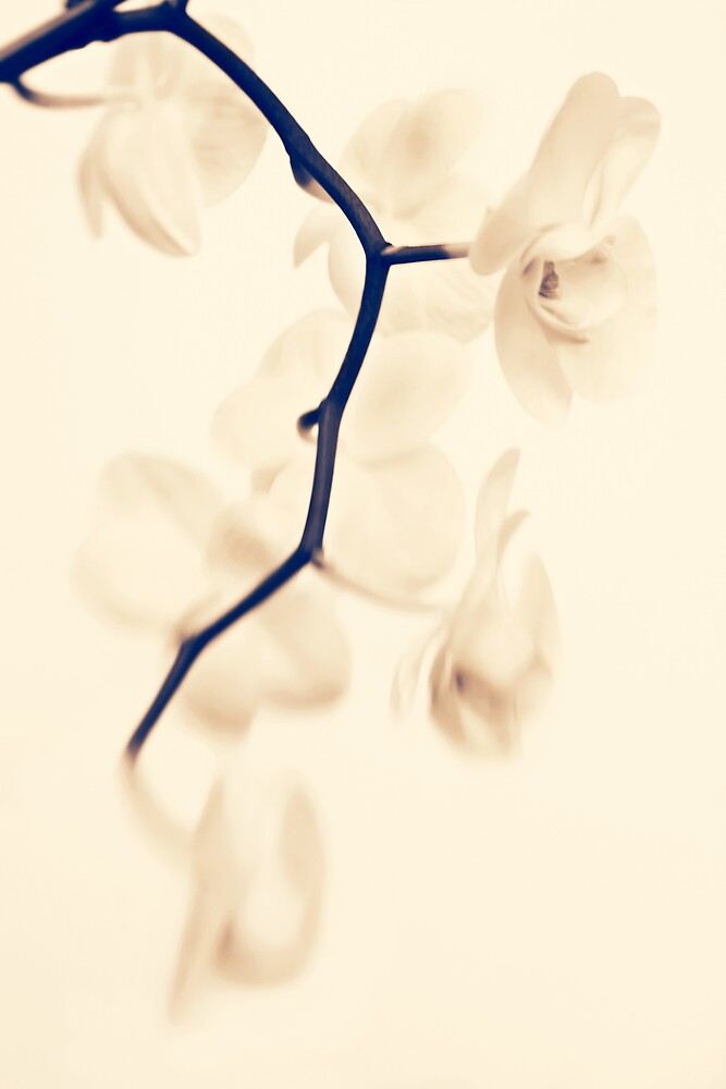 Lensbaby orchid by JanetW