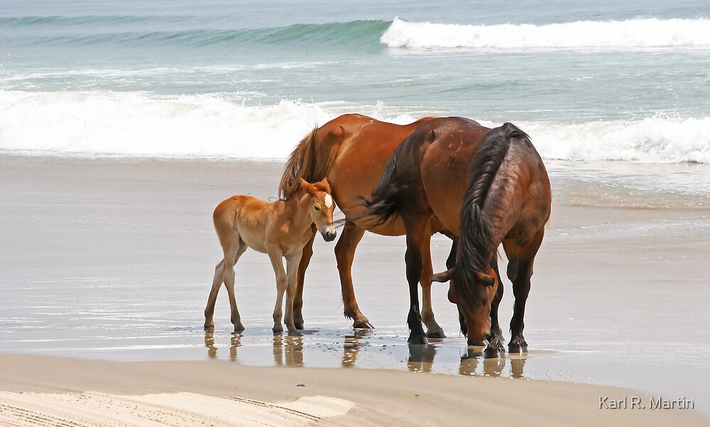 Family of wild horses on the beach by karl r martin redbubble family of wild horses on the beach by karl r martin publicscrutiny Gallery