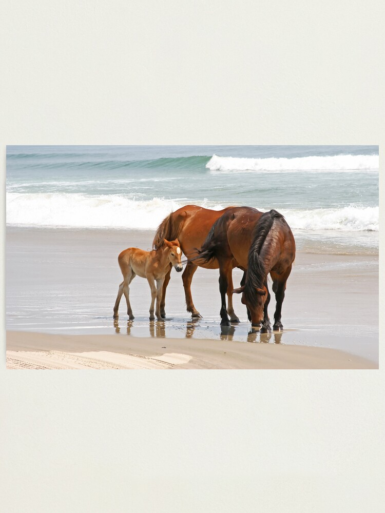Alternate view of Family of Wild Horses on the Beach Photographic Print