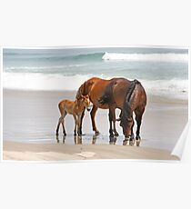 Family of Wild Horses on the Beach Poster