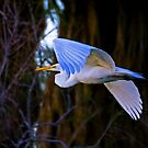 Great White Egret by Marvin Collins